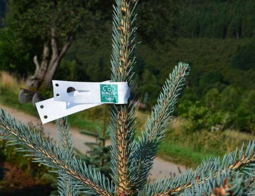 Weihnachtsbaum-ausbinden