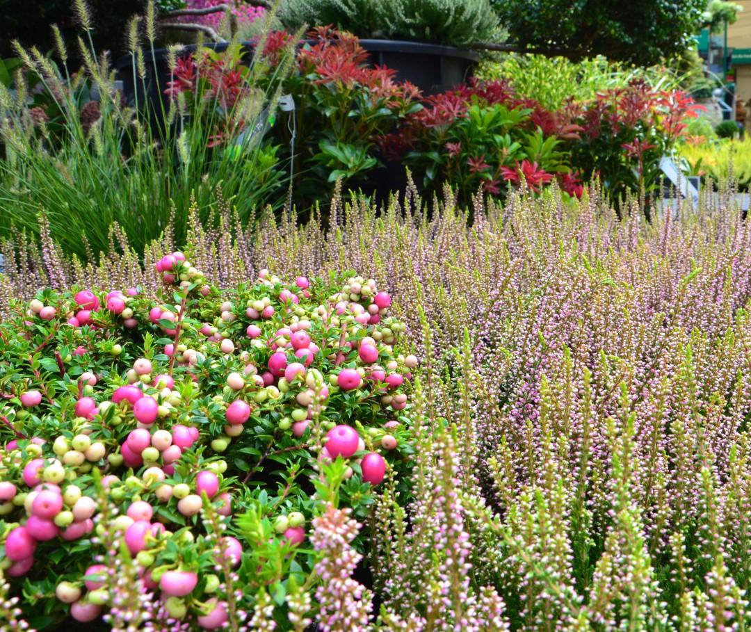 Heidelandschaft-Gartencenter