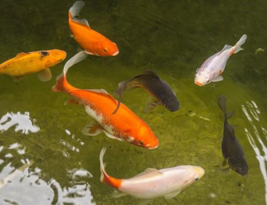 garden-pond-938105_1920
