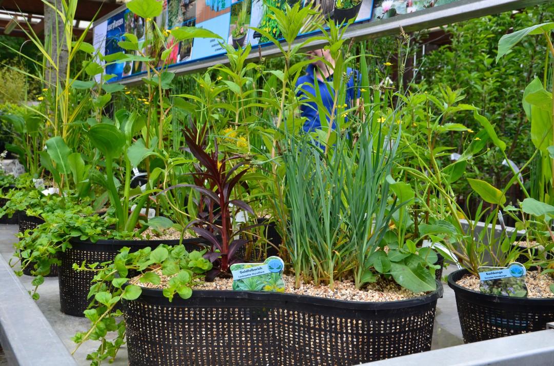einfach nur ins wasser stellen wasserpflanzenarrangements. Black Bedroom Furniture Sets. Home Design Ideas