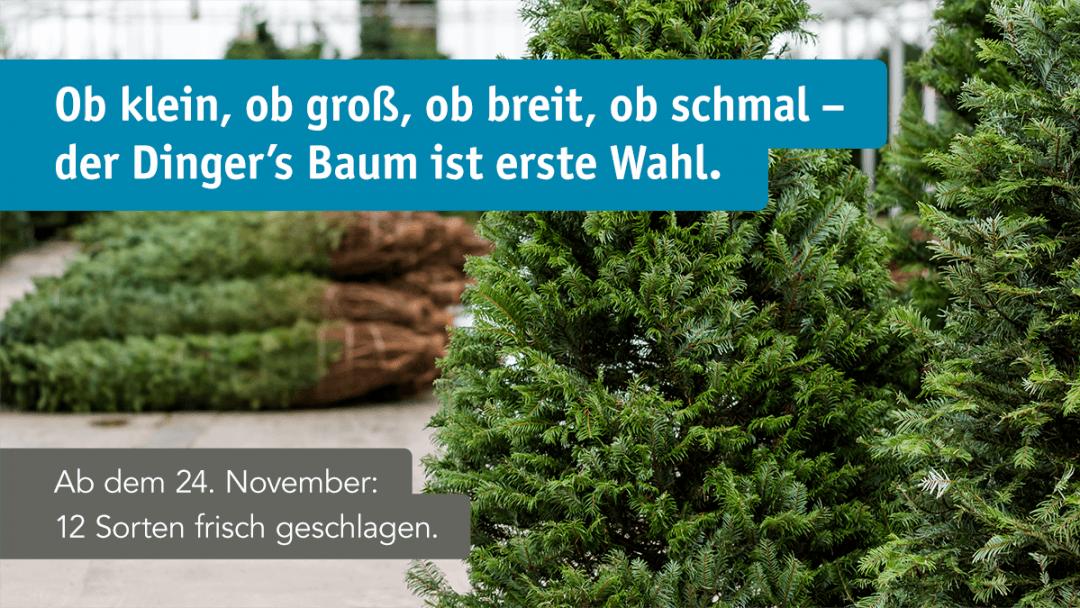 fb_okt_weihnachtsbaum_w1200
