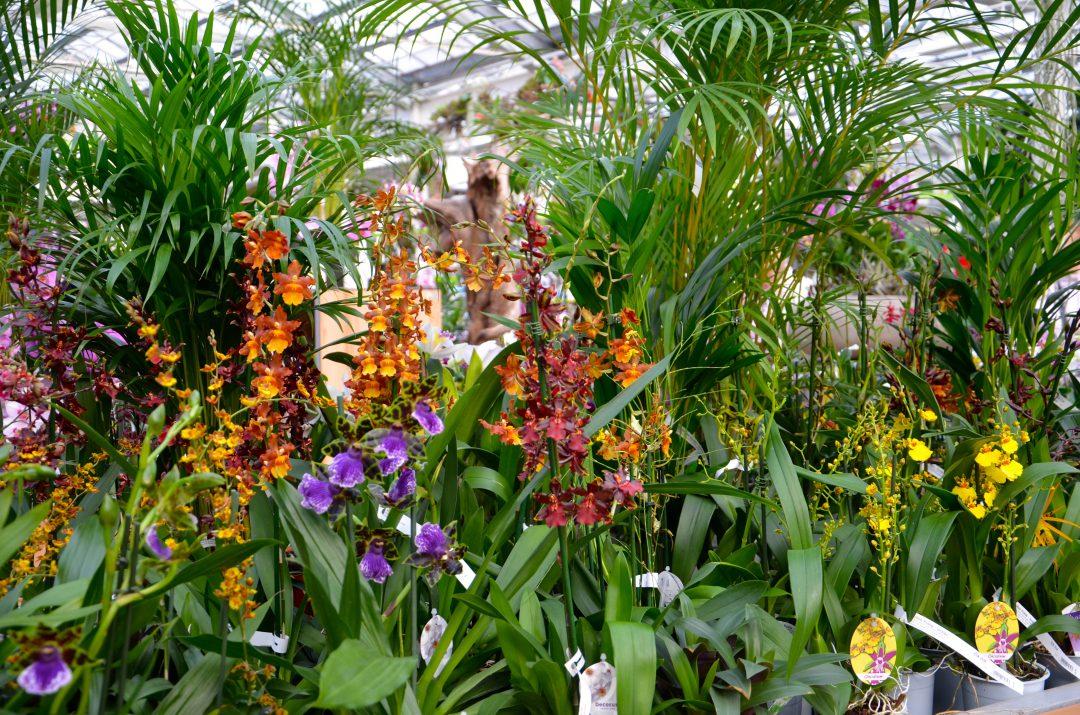 Diverse Orchideenarten und -sorten
