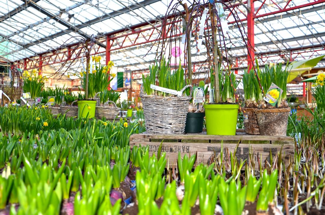 Frühlings-pracht - Hyazinthen, Osterglocken und Salix