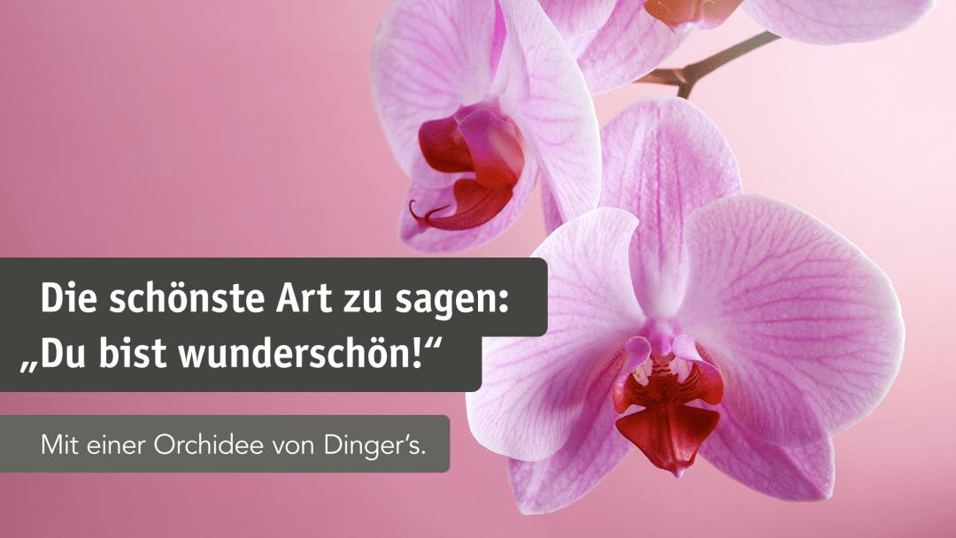 multiscreen_orchideen_1
