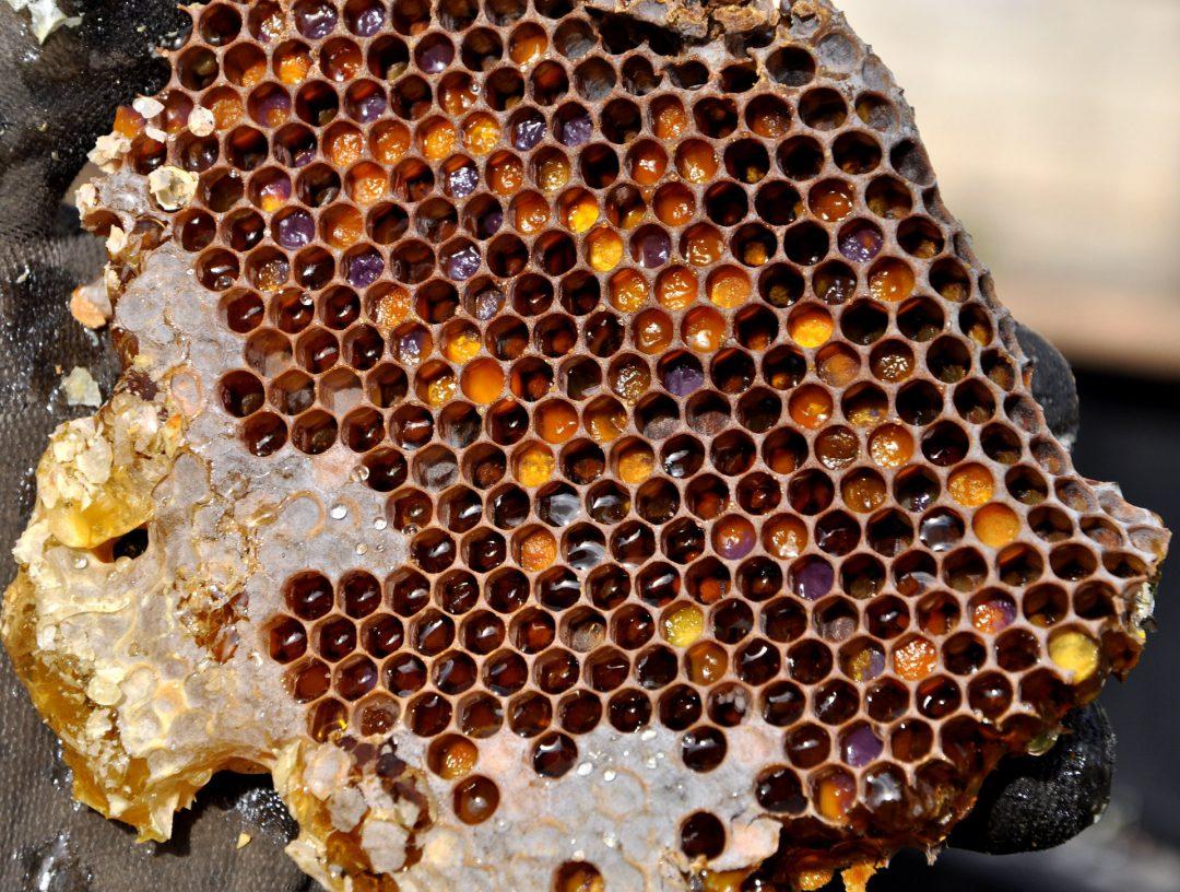 honeycomb-2142730_1920