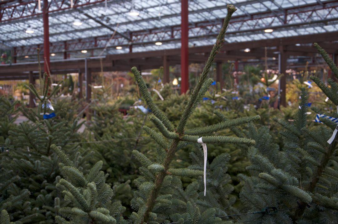 Regionaler Weihnachtsbaum