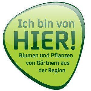 ibvh-logo