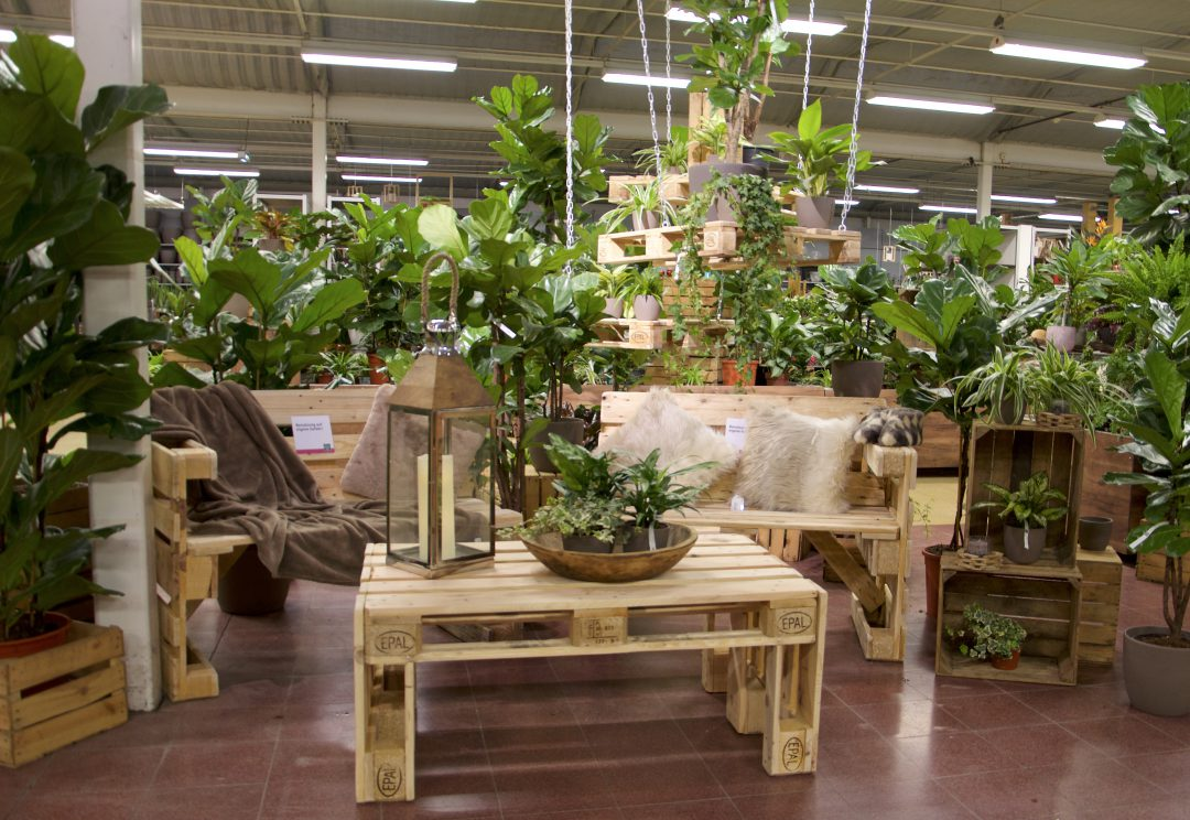 Grünpflanzenwochen