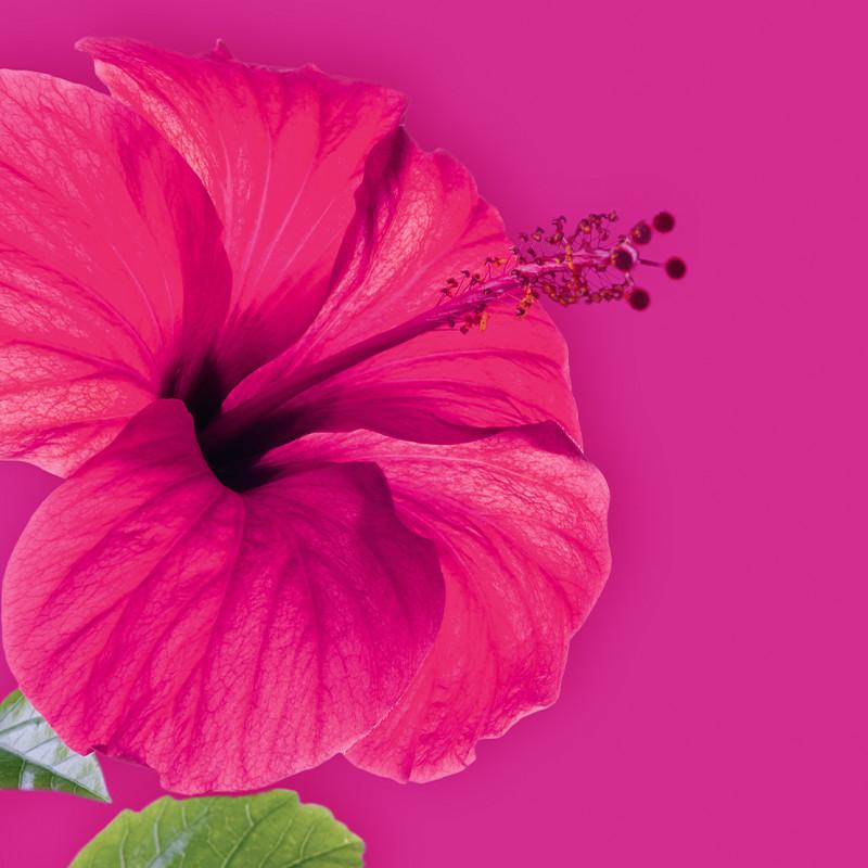 fruehling_pink_hibiskus