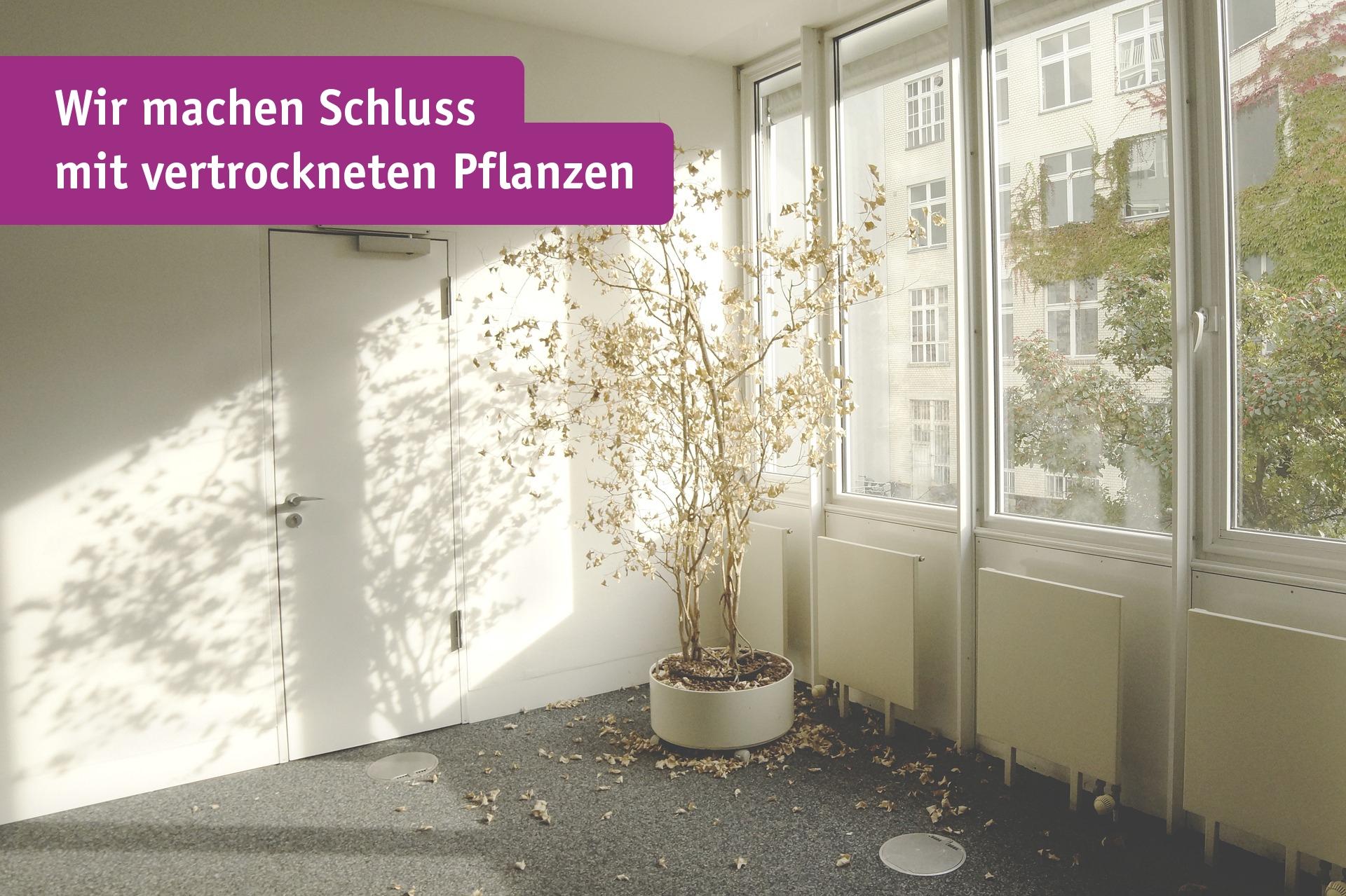Pflanze, die vergesssen wurde zu Gießen.