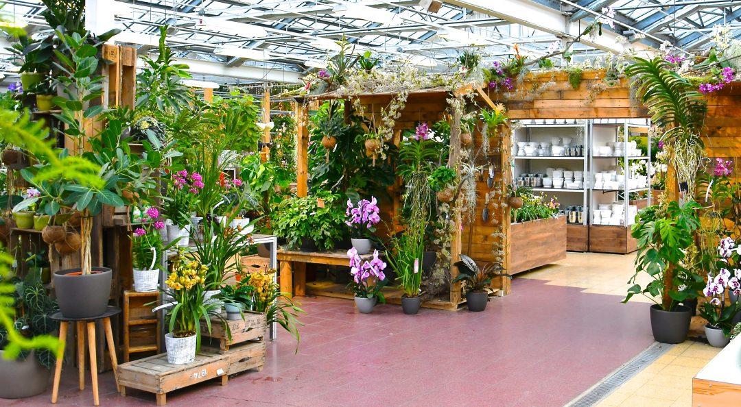 Orchideenausstellung im Gartencenter
