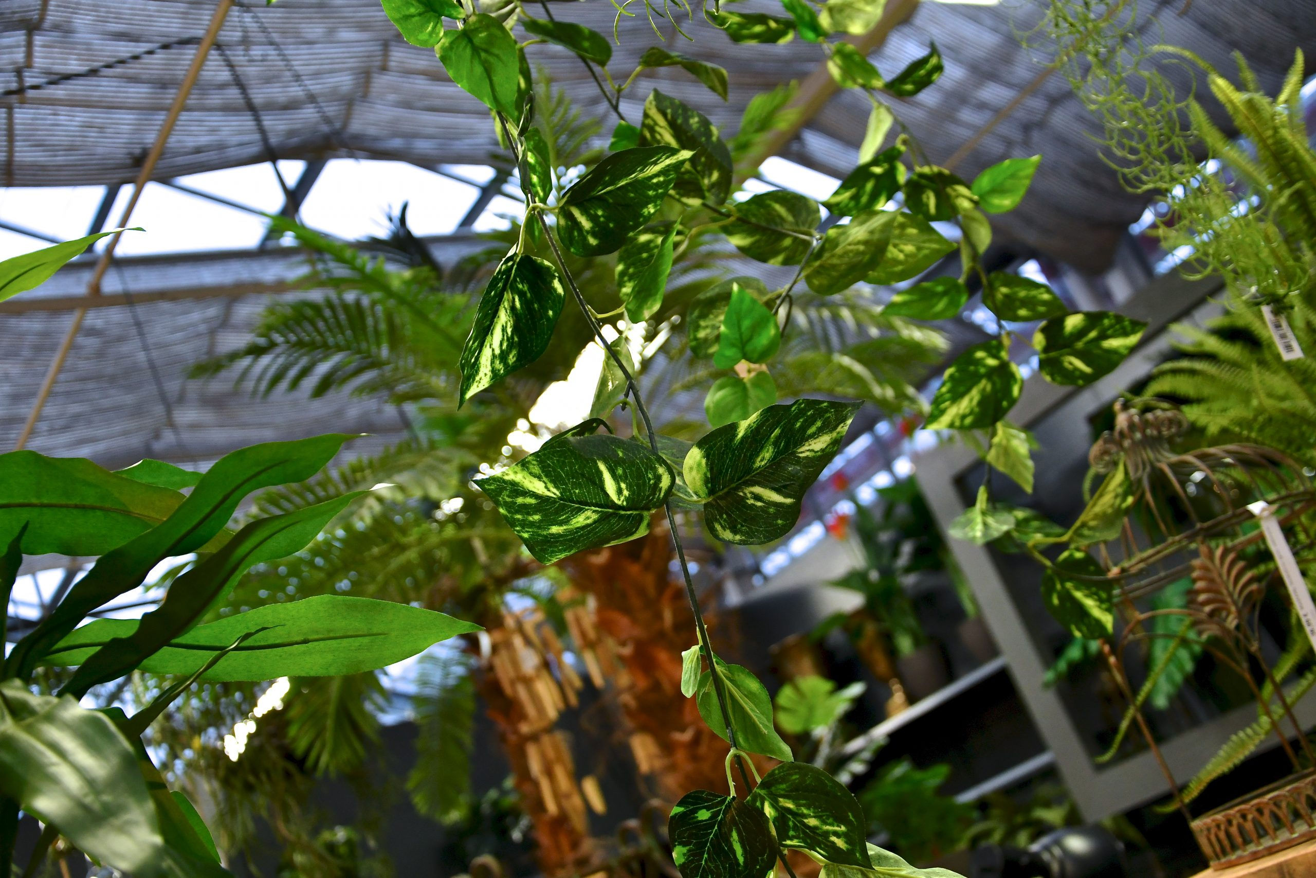 Konnen Kunstpflanzen Wachsen Je Nachdem Schon