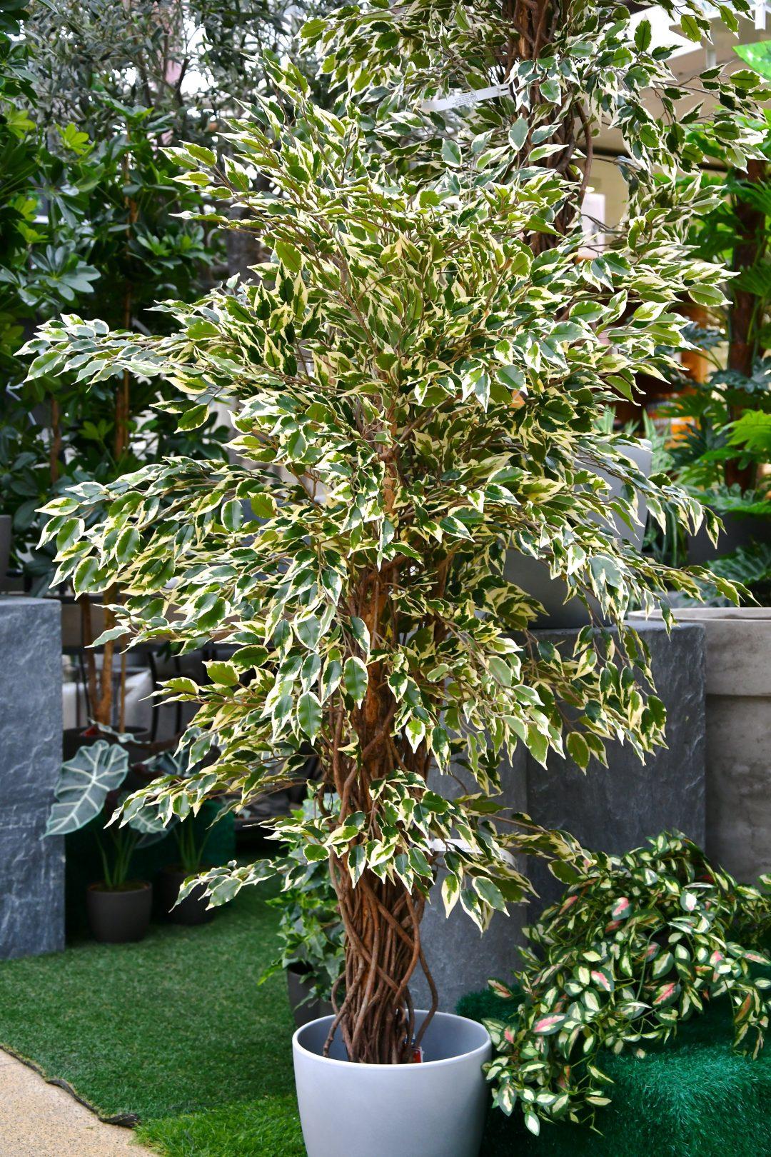 Auf diesem Bild sieht man einen großen künstlichen Ficus mit gelblich grünem Blattwerk. Der Ficus steht in einem weißen Übertopf und sieht verblüffend echt aus. Im Hintergrund sieht man weitere große Kunstpflanzen.