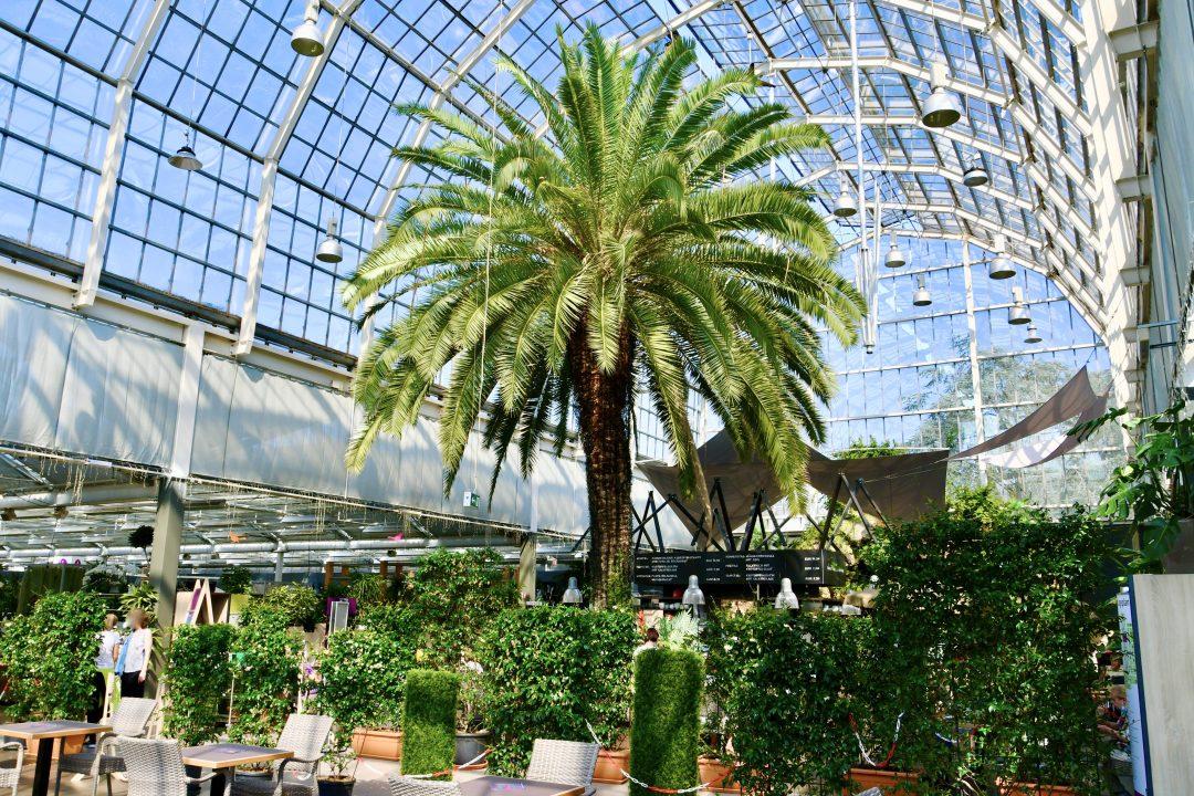 Das Palmencafe in Dingers Gartencenter Köln. Eine Palme steht unter einer großen Glaskuppel.