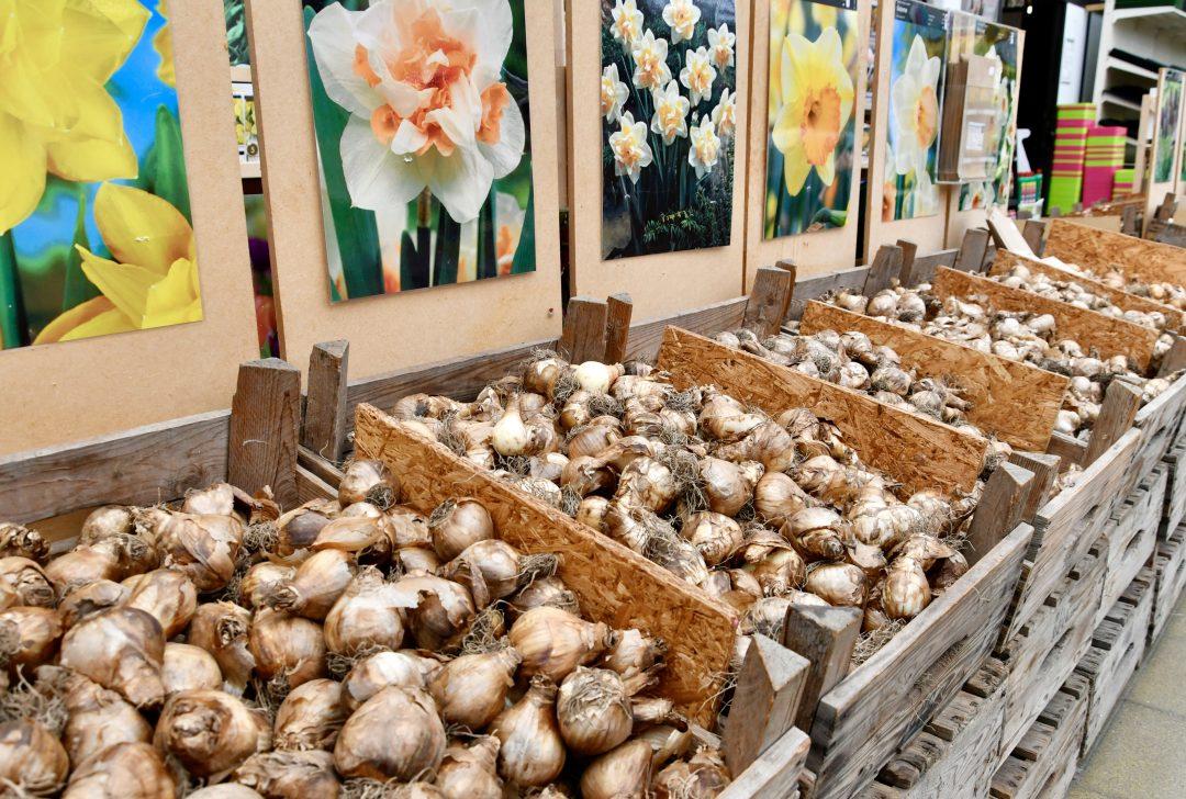 Verschiedenen Sorten an Blumenzwiebeln in Holzkisten sortiert