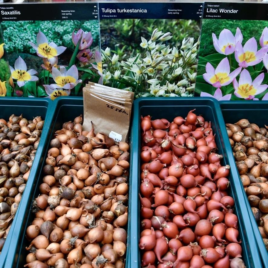 Verschiedene Blumenzwiebel Sorten in grünen Kisten