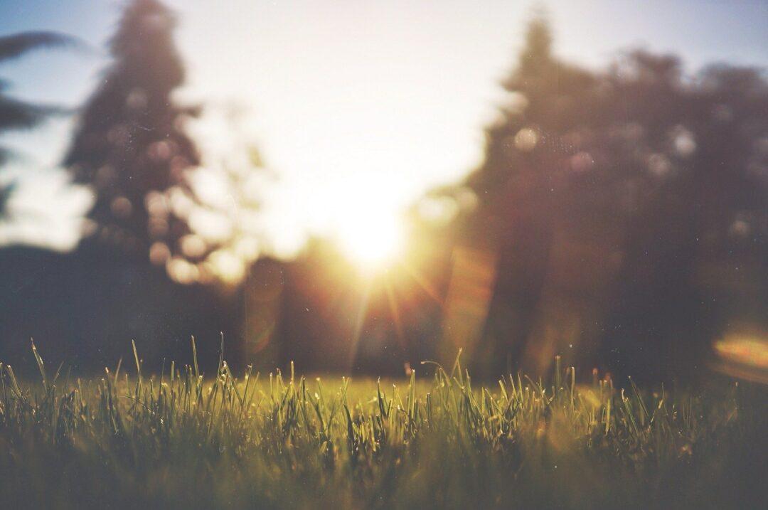 Landschaft mit Rasen, Bäumen und Sonnenaufgang