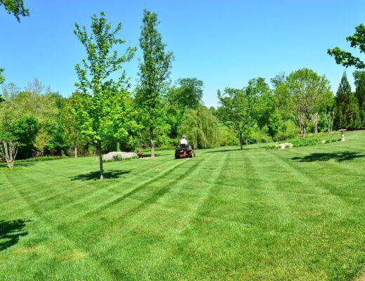Grüne Wiese mit Bäumen und Rasenmäher