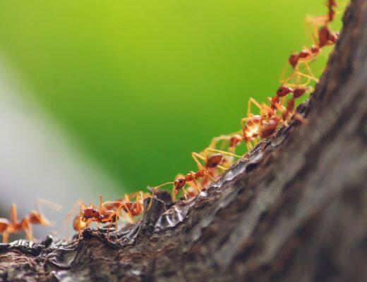 Ameisen auf einem Baum